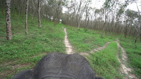 View of elephant ride through rainforest. Thailand. Top view of elephant ride through rainforest. Thailand stock footage