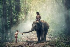 View of Elephant Riding Horse Stock Photo