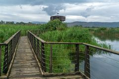 Elevated footpath in the Hula Nature Reserve. View of an elevated footpath and an observation tower in the Hula Nature Reserve, northern Israel royalty free stock images