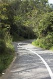 Empty curvy road taking to deep forest Stock Images