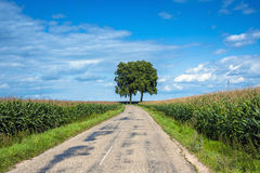 View of empty road with cornfield and trees Stock Images