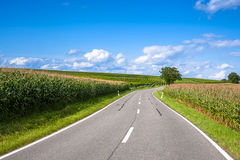 View of empty road with cornfield and trees Stock Photos