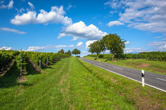 View of empty road with vineyards and trees Stock Photo