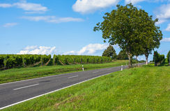 View of empty road with vineyards and trees Royalty Free Stock Image