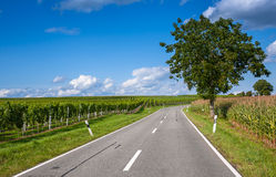 View of empty road with vineyards and trees under Royalty Free Stock Images