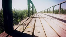View from empty wooden pier at reed land under blue sky. Dolly. Close up. View from empty wooden pier at reed land under blue sky, bridge through the reeds on stock video
