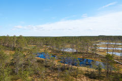 View of estonian Viru Raba bog landscape with several small lakes and a small coniferous forest of spruces and pines with a wooden Stock Photography