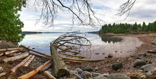 View of the estuaries in Ladysmith shoreline in Vancouver Island. Panoramic view of the estuaries with old logs in Ladysmith shoreline in Vancouver Island Stock Photography