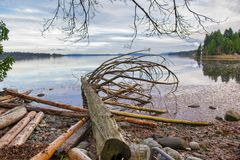 View of the estuaries in Ladysmith shoreline in Vancouver Island. View of the estuaries with old logs in Ladysmith shoreline in Vancouver Island, Canada Stock Photo
