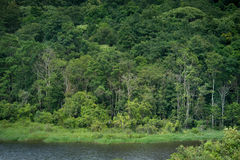 View  Evergreen Forest,Khao Yai National Park Thailand under sun Stock Images