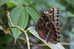 View of the exotic butterfly on a leaf Stock Photos