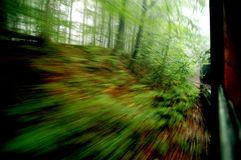 View from an express train. In a forest Stock Photography