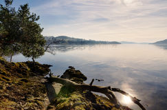 Fallen branch on rocks by Lake Windermere. Stock Image