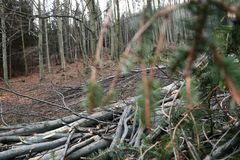 View on fallen trees across branches of spruce stock photos