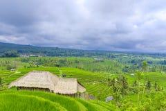 Jatiluwih Rice Terraces in Indonesia Royalty Free Stock Photos