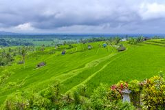 Jatiluwih Rice Terraces in Indonesia Royalty Free Stock Photo