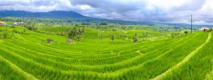 Jatiluwih Rice Terraces in Indonesia Stock Images