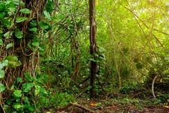 View of the famous Kalalau trail along Na Pali coast of the island of Kauai Royalty Free Stock Images