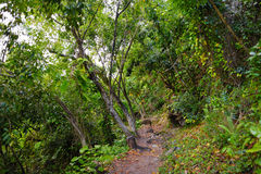 View of the famous Kalalau trail along Na Pali coast of the island of Kauai Royalty Free Stock Photography