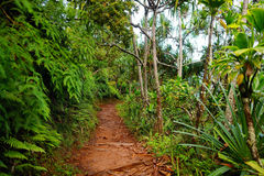 View of the famous Kalalau trail along Na Pali coast of the island of Kauai Stock Images