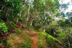 View of the famous Kalalau trail along Na Pali coast of the island of Kauai Stock Photography