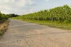 View of the the famous valpolicella vineyards, Veneto, Italy. Landscape of vineyards in the Valpolicella area, Veneto Italy stock photo