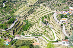 View of the famous vineyards of Porto Royalty Free Stock Images