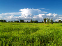 View  in farm 01 Royalty Free Stock Photos
