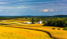 View of farm fields and rolling hills from a hill in rural York Royalty Free Stock Image