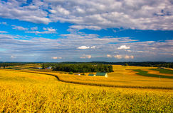 View of farm fields and rolling hills from a hill in rural York Stock Photo
