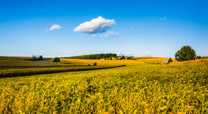 View of farm fields and rolling hills in York County, Pennsylvan Royalty Free Stock Photography
