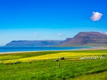 View of a farm on the seashore in Iceland Stock Photography