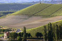 View of a farm in the vineyards. In the Langhe in Piedmont Stock Images