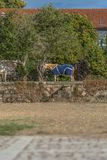 View of farmhouse, with horses a pasture, trees and vegetation average and classic traditional portuguese building as background.  stock photo