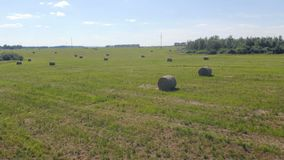 View of farming field with hay. Hay rolls are on a field, prepared for transporting stock video footage