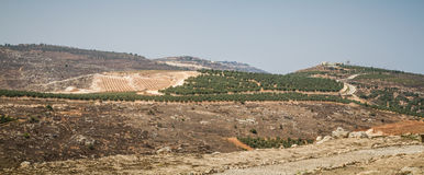 View of the farmland, settlement Shilo in Israel. Rural landscape, farmland of settlement Shilo, the panoramic view from the archaeological park of Shiloh in Royalty Free Stock Images