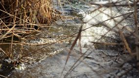 View of fast flowing water between the stones and dry reeds stock video