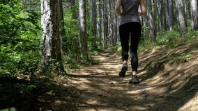 View on feet of traveler woman hiking on the forest trail path in mountain. Walking on rocks. The camera behind the girl moves smoothly. Achieving the goal stock footage