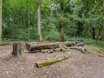 A view of a felled tree in a woodland clearing. In Rural Lancashire royalty free stock photo