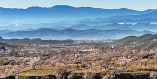 View of a Field of Almond Trees Royalty Free Stock Photos