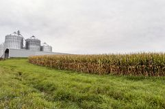 Grain bins and field of corn Stock Photography