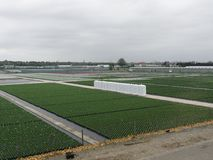 View of the field with greenhouses stock photos