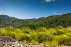 View on field with high green grass, forest and mountain Royalty Free Stock Images