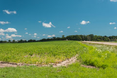 View of a field in Illinois country side royalty free stock photography