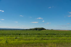 View of a field in Illinois country side Stock Photography