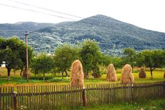 View of the field and the mountains Karpaty royalty free stock photo