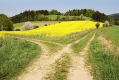 View on field path Stock Photography