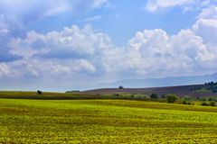 View of field with sprouting crops Royalty Free Stock Image