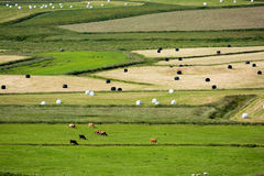 View of fields and cattle from above Royalty Free Stock Photography