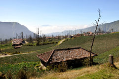 View fields in Cemoro Lawang village Stock Images